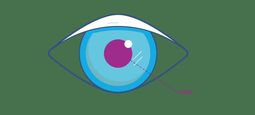 Ilustración que muestra la pupila del ojo .